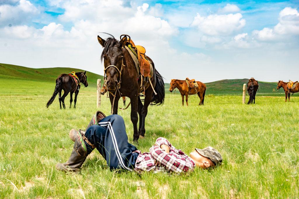 モンゴル高原の馬と昼寝